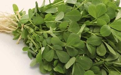 Raw Fenugreek Leaves