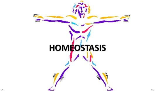 How Does Diabetes Disrupt Homeostasis? - Diabetes Self Caring